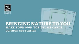 Bringing nature to you - common cuttlefish wildlife top trumps