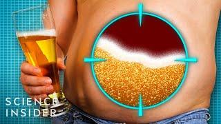 Why Do Men Get Beer Bellies?