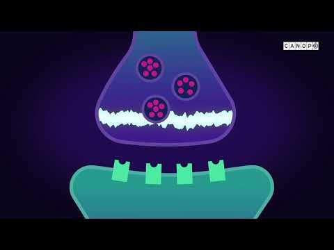 Les entozoaires de la lamblia les symptômes