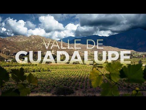 EL OLIVAR - En el Corazón del Valle de Guadalupe ¨
