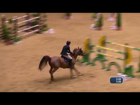 4th place for Harrie and Empress EH Z at CSI4* Dortmund