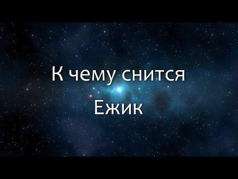 К чему снится Ежик (Сонник, Толкование снов)