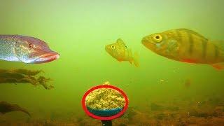 Приманка из семечек для рыбы
