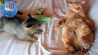 Смешные приколы с Кошками и Котами | #2 | Funny tricks with cats