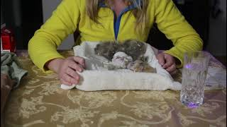 How to raise and care for newborn baby rabbits