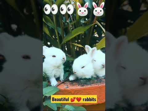 , title : 'Very beautiful 3 rabbits.||🐇🐰#animalslife #rabbitlovers
