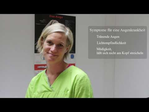 Tieraugenärzte empfehlen Rex Specs. Ein Interview mit Frau Dr. med. vet. Birgit Müller in Weinheim.
