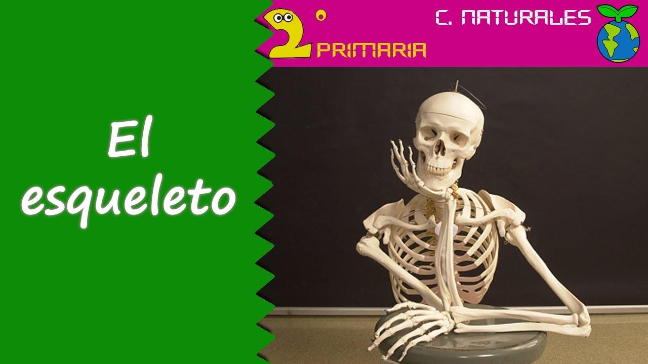 Ciencias de la Naturaleza. 2º Primaria. Tema 2. El esqueleto