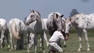 True Appaloosa - Trailer