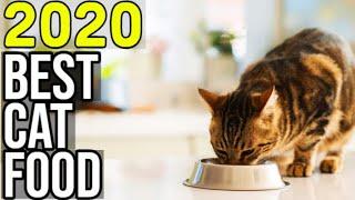 BEST CAT FOOD 2020 - Top 10