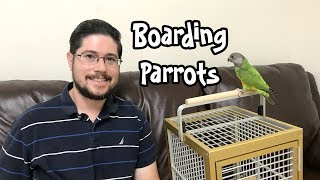 Boarding Parrots - Advice on Parrot Boarding