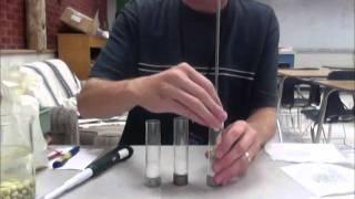 Cellular Respiration Lab Walkthrough