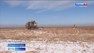 Аграрии Хабаровского края возобновили уборку сои