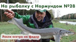 Ловля осетра на фидер : На рыбалку с Нормундом #28