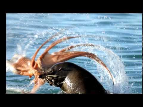Nizoral laban kuko halamang-singaw