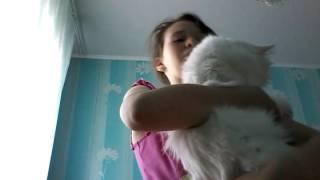 Мой Котик Антошка