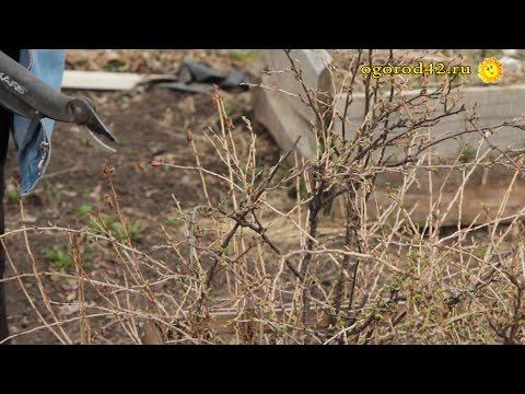 Очищение от паразитов в новокузнецке