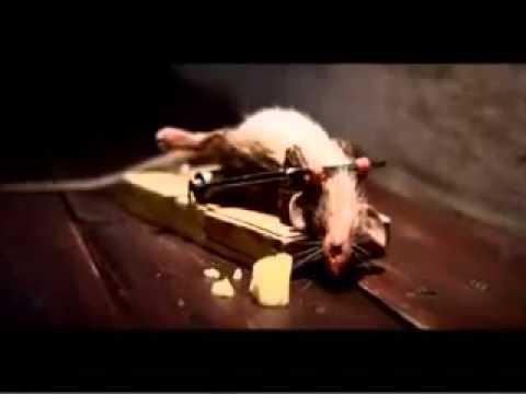 Quanti giorni per dare alla medicina a un gattino da vermi