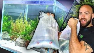 ADDING FISH TO *NEW* FRESHWATER REEF AQUARIUM! MD FISH TANKS