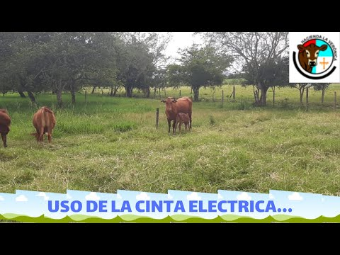 USO CINTA ELECTRICA