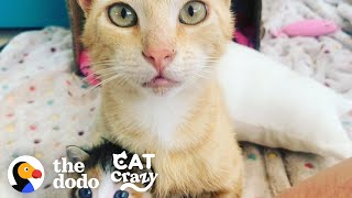 Smartest Stray Cat Follows Woman Home | The Dodo Cat Crazy by The Dodo