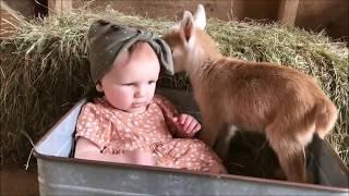 動物と赤ちゃん笑える!癒される♪子供とヤギの最強コンビ動物癒しbaby&goats