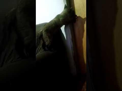 Croiss abrindo a porta!!!