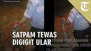 Viral Video Satpam di Tangerang Tewas Digigit Ular Berbisa