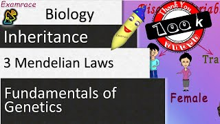 3 Mendelian Laws Of Inheritance - Fundamentals Of Genetics (Examrace)