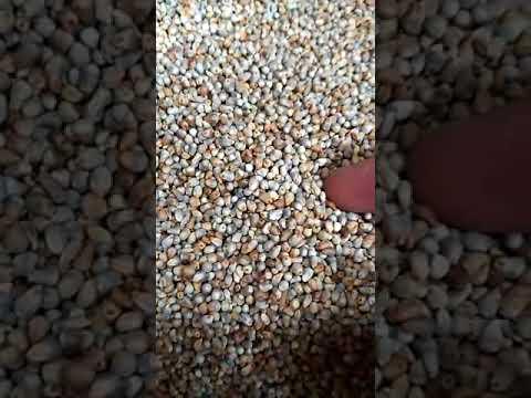 Wheat Grader Machine