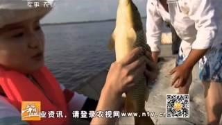 20141119 美丽中国乡村行 黑龙江上捕江鱼