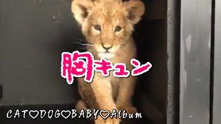 動物の赤ちゃん超かわいい動物の赤ちゃん動画集②