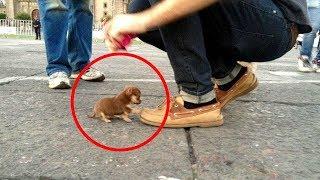 Parmak Kadar Köpek...Dünyanın En Küçük AZ TÜY Döken 11 Köpek Irkı