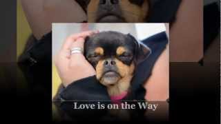 Love is on the Way (National Mill Dog Rescue; 2013)