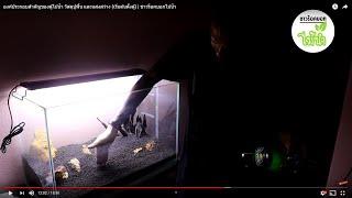 [ชาวร็อคบอกไม้น้ำ] องค์ประกอบสำคัญของตู้ไม้น้ำ วัสดุปูพื้น และแสงสว่าง (เริ่มต้นตั้งตู้)