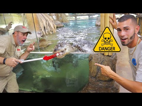 FEEDING ALLIGATORS in a PET STORE! **GONE WRONG!**