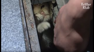 Kitten Stuck In A Narrow Pit Grabs Passengers To Play With Him | Kritter Klub