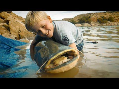 Fiskeri efter maller og karper i Ebro i Spanien