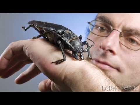 hqdefault ТОП 10 Самые большие насекомые в мире