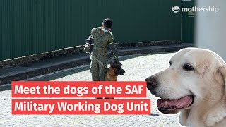 Meet the dogs of the Singapore Armed Forces Military Working Dog Unit