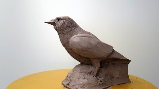 Sculpting A Bird - Jackdaw