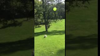 animale un caine haios vs balon