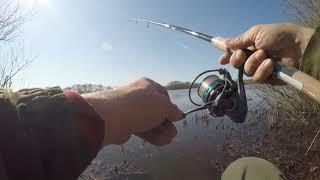 Рано утром через балку кот несется на рыбалку