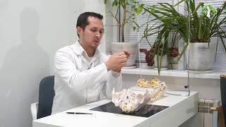 С5-С6 протрузия диска, межпозвоночная грыжа (шейного отдела)