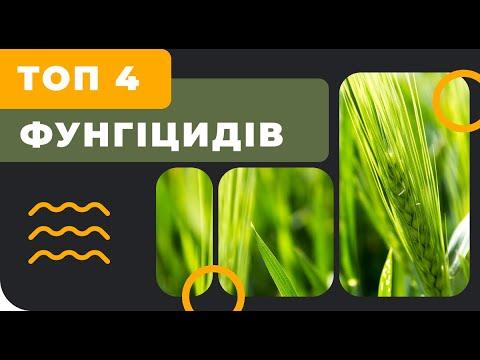 Топ 4 фунгицидов на Т1 зерновых