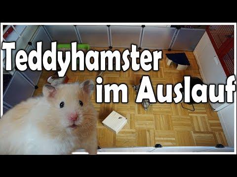 Bumble das erste Mal im Auslauf! | Hamster Auslauf Update (Juni 2017)