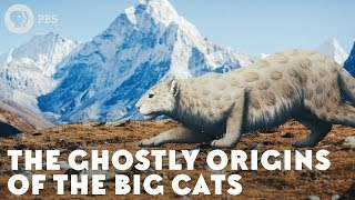 The Ghostly Origins of the Big Cats