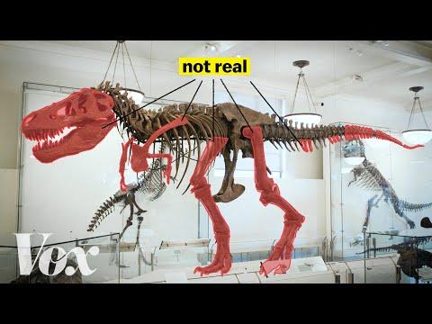 Jak se vědcům podařilo vyřešit tuto dinosauří skládačku? - Vox