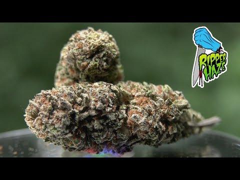 Marijuana Monday - Ripper HAZE aka Amnesia Haze!🔥🔥🔥