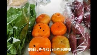 高知オーガニックマーケット第10回秋の収穫祭